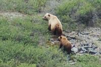 Alaska_joe_white_bear_pix_dsc_03361